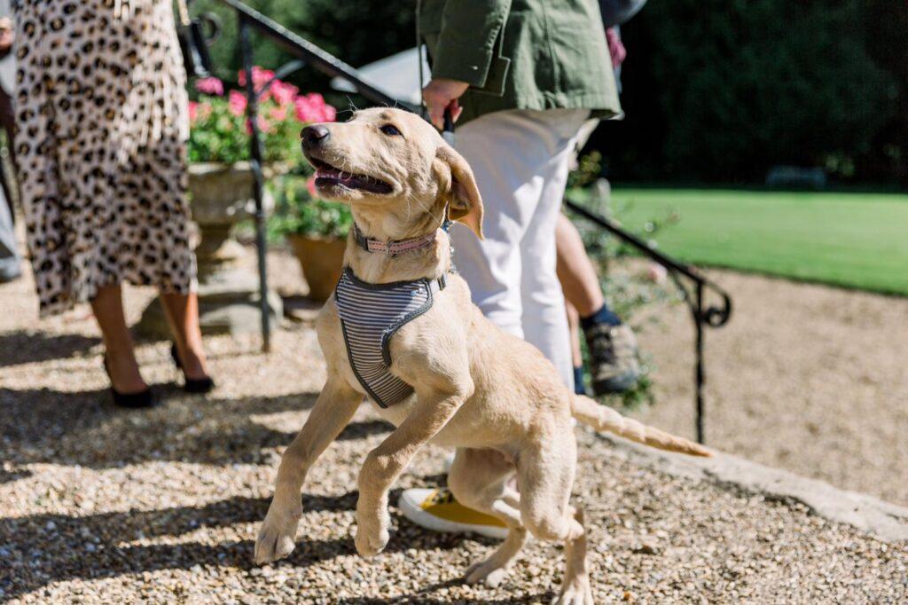 dog friendly weddings bristol ceremony